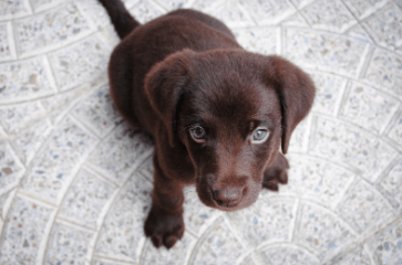 5 Signs Your Dog May Have Oral Disease