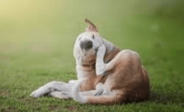 Caring For Your Itchy Dog